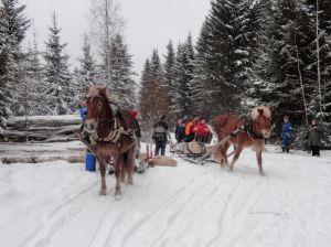 Tammat Tepsukka ja Elli tuovat puita laanille. Kuva: Siru Saarinen