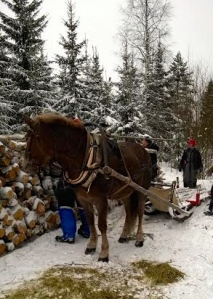 Tepsukka odottaa laanilla kuorman purkamista. Kuva: Riina Törnqvist