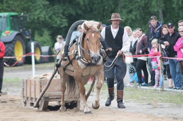 Eniten painoonsa nähden vetänyt hevonen Vinpotar ja Matti Makkonen